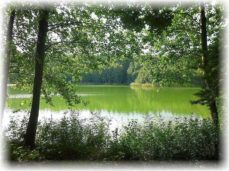 Paradoxerweise schimmerte der Rote See heute grün.