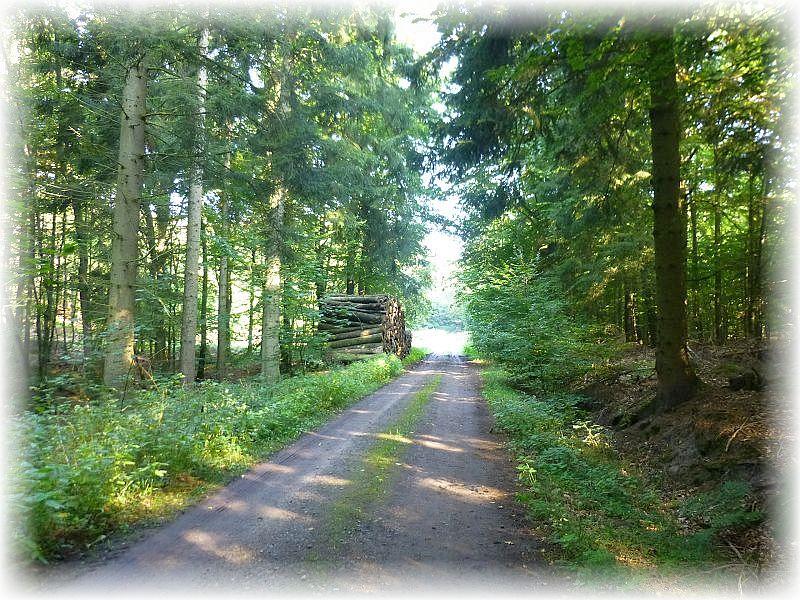 Buchenwälder und Fichtenforste mit eingestreuten Erlenbrüchen wechseln in der Trechower Holzung immer wieder.