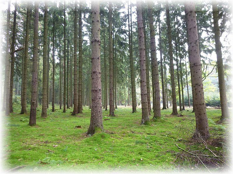 Der Holmer Wald bei Dassow war das Ziel einer individuellen Sonntagswanderung am 07. September 2014. In den moosigen Nadelwäldern versteckte sich so manche Überraschung.