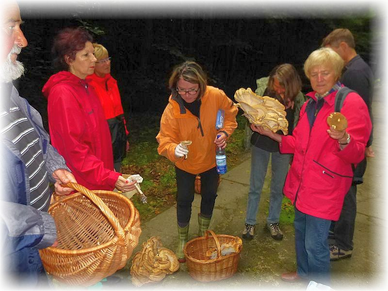 Neben den gigantischen Riesenporlingen erwecken auch weiger spektakuläre Pilze das Interesse der Damen.