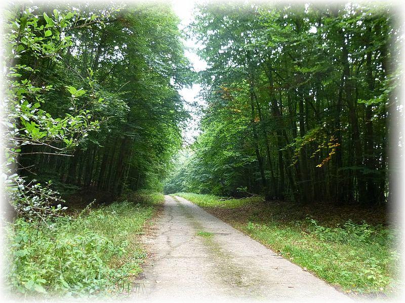 Die Jülchendorfer Buchen und angezende Nadelwaldforste waren das Ziel einer individuellen Pilzwanderung am 12. September 2013.