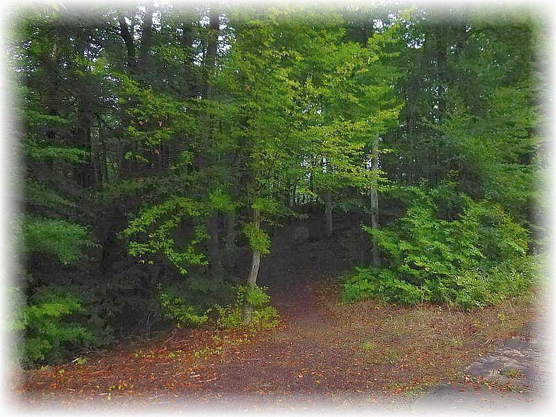 Durch das schattige Radebachtal bei Blankenberg führte heute eine individuelle Pilzwanderung.