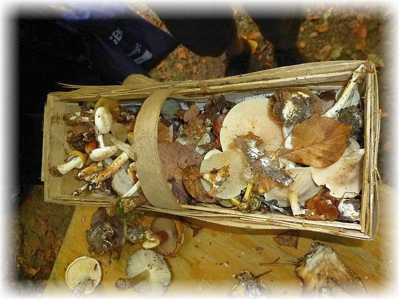 Immer mehr Pilze werden am Sortiertisch angeliefert.