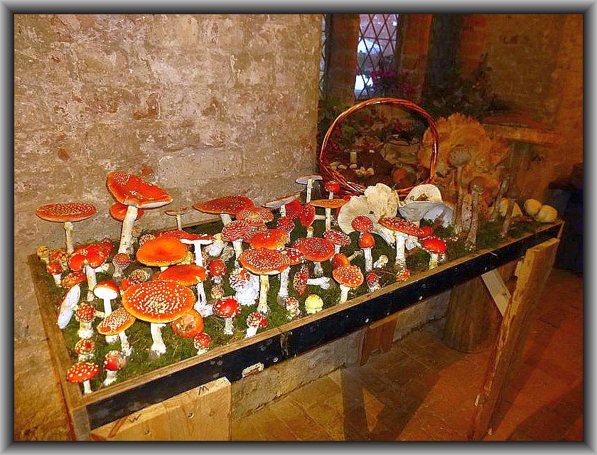 Nach den Pilzwanderungen ging es in die Ausstellung. Mit 360 Großpilzarten war es den Rehnaer Pilzfreunden wieder gelungen, eine Pilzschau der Superlative aufzubauen.