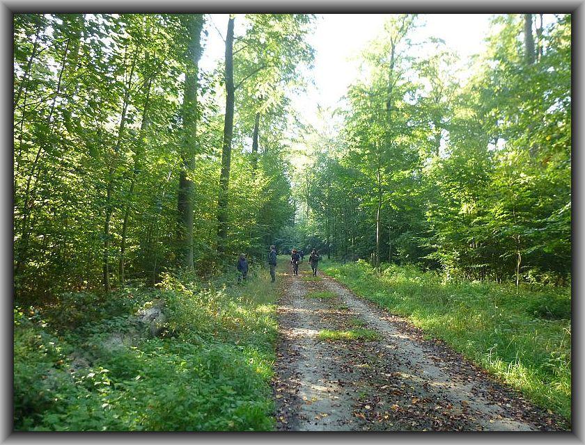 Ich fuhr traditioneller weise mit einer sehr interessierten Gruppe zur Betonspur des Woitendorfer Waldes und wir konnten viele interessante Pilze entdecken, auch wenn es im Vergleich zu anderen Jahren eher bescheiden zuging.