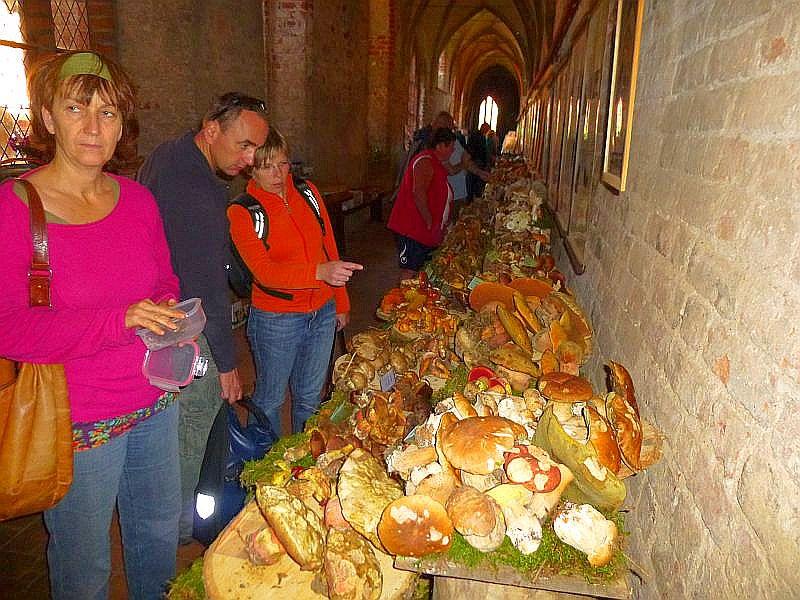 Pilze so weit das Auge blickt auch in diesem Jahr in den Kreuzgängen der alten Klosteranlage.
