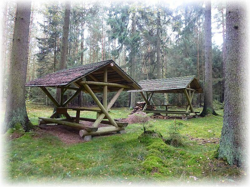 Saure und sandige Wälder finden wir zwischen Zapel und Ruthenbeck. Für Liebhaber von Marone, Steinpilz und Pfifferling eine ideale Adresse. Von genannten Arten waren heute aber nur Maronen in nennenswerten Mengen vertreten.