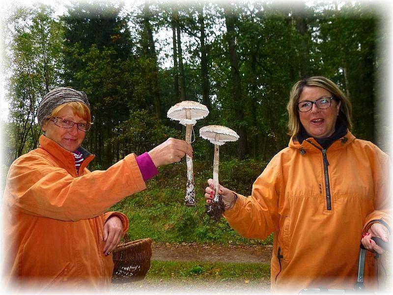 Wunderbar frische Riesenschirmpilze begrüßten uns gleich zu Beginn am Waldesrand. Wenn das kein gutes Omen ist!