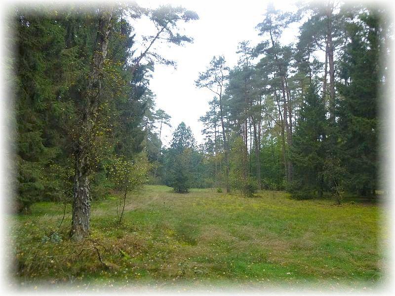 Der Sültener Forst im Naturpark Sternberger Seenland war heute das Ziel einer individuellen Pilzwanderung.