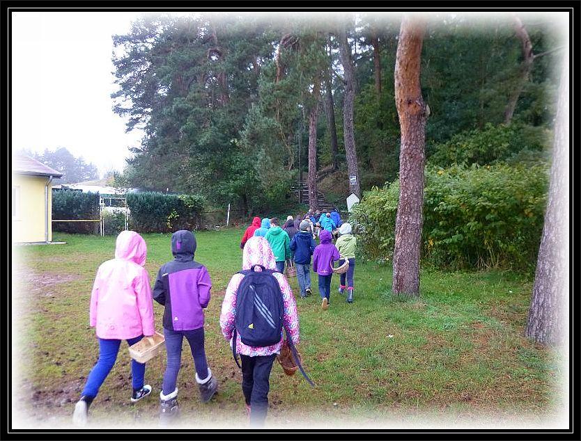 Gleich am Ortsrand beginnt der Wald und kaum einer der Schüler und Schülerinnen konnte es abwarten, den ersten Pilz zu finden.