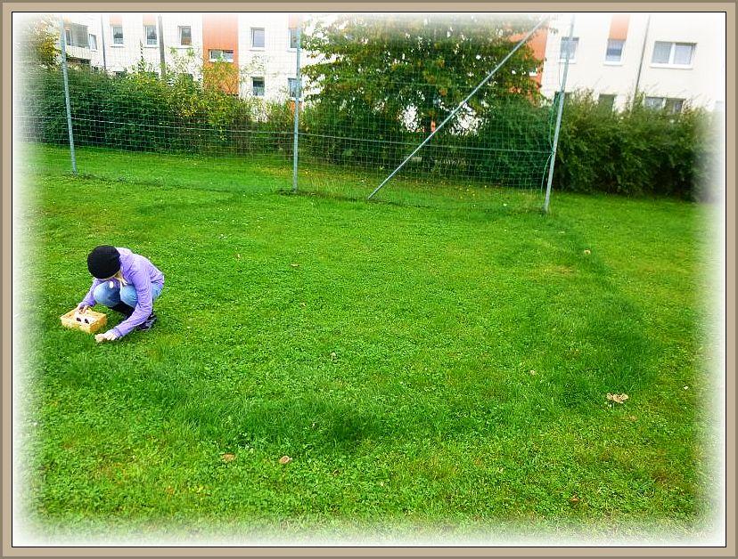 Genau dort, wo hier die Pilze stehen, wächst das Gras höher, üppiger und ist auch intensiver grün gefärbt. So erkennt man auch wenn keine Fruchtkörper zu sehen sind, das hier eine Pilzstelle ist. Verschiedene Arten zeichnen dafür verantwortlich. Im Frühling kann es dort Maipilze geben, im Sommer Nelkenschwindlinge und hier waren es Weichritterlinge.