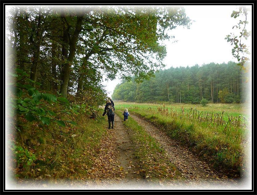 Weiter geht es links an der Waldkante entlang und rechts an einem abgeernteten Maisfeld.