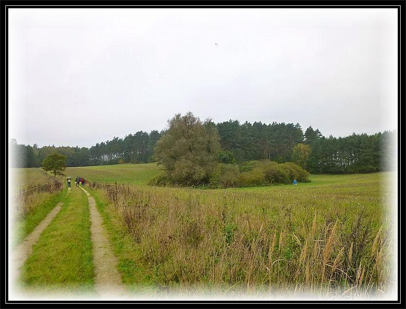 Teils durch offene Landschaften, teils durch geschlossene Wälder führte uns die heutige Pilzwanderung.