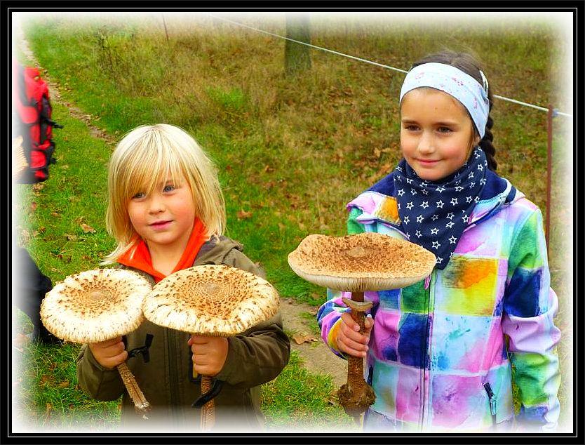 Die Kleinsten haben die größten Pilze!