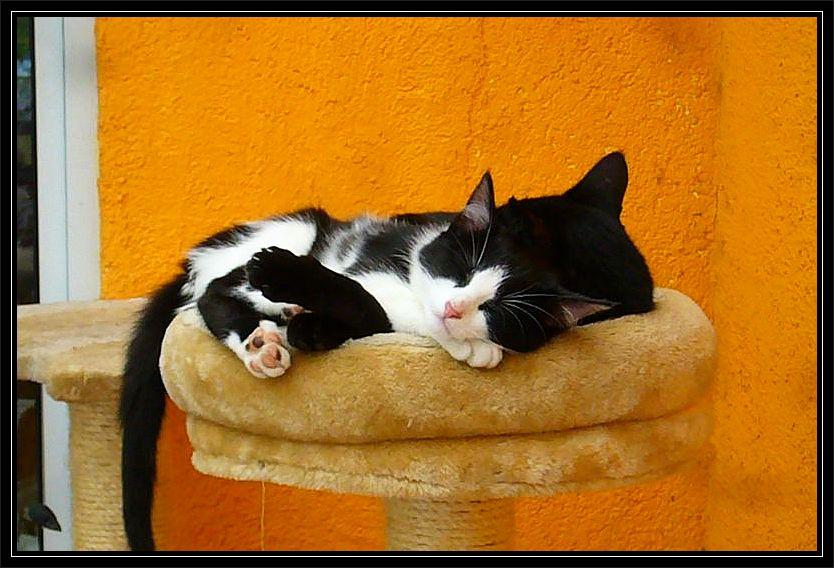 Während wir alle voll am Wirbeln waren, ließen sich unsere Katzen davon garnicht stören und genossen ihren Mittagsschlaf.