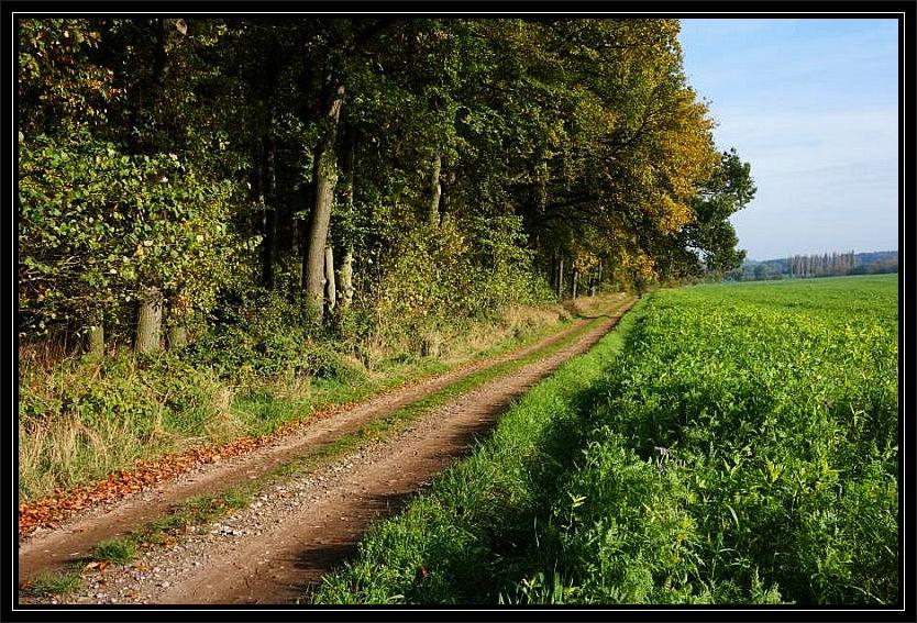 Der Wald zwischen den Ortschaften Thorstorf und Parin im äußersten Nordwesten Mecklenburgs war heute das Ziel einer spätherbstlichen Pilzwanderung.