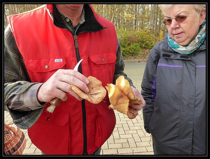 Es waren delikate Edel - Reizker (Lactarius deliciosus).
