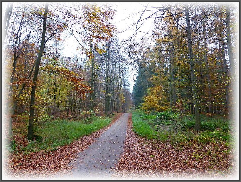 Unser heutiges Pilzrevier. Überwiegend Buchenwälder auf besseren Böden zwischen Goldebee und Nevern.