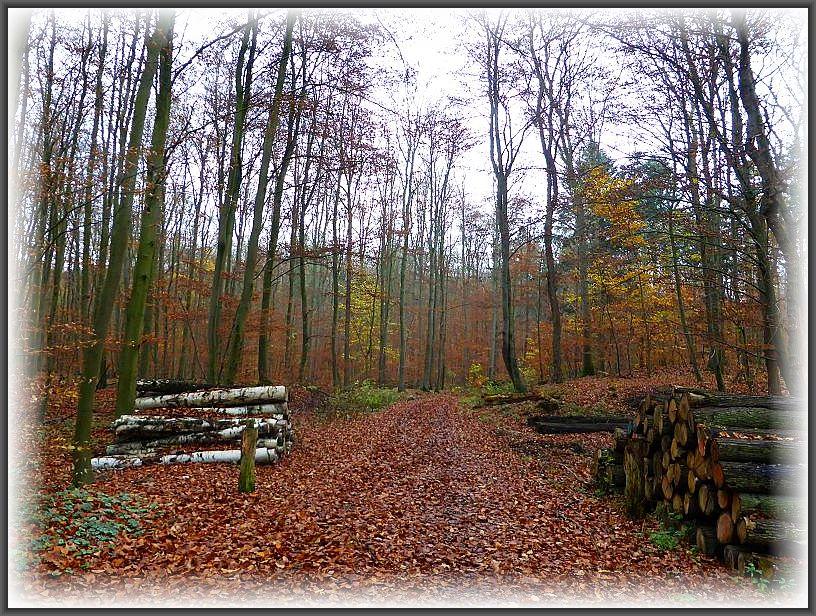 Forst Raben - Steinfeld am 23. November 2014. Von hier aus starteten wir heute zu unserer lezten Kartierungsexkursion des Jahres 2014. Es ist nun ruhig in den Wäldern geworden. Die letzten Blätter erreichen bald den Waldboden und die Natur bereitet sich auf die Winterruhe vor. Melancholische Stimmung breitet sich aus und ich liebe diesen spätherbstlichen Wald. Anders als bei den meisten anderen Menschen mag ich den November sehr.