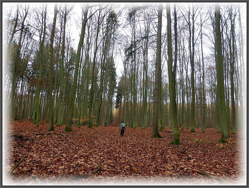Und weiter führt uns der Weg durch den stillen Spätherbstwald. Wir hatte außerdem Glück, das keine Treibjagd im gange war, wie sie öfters zu dieser Jahreszeit stattfinden.