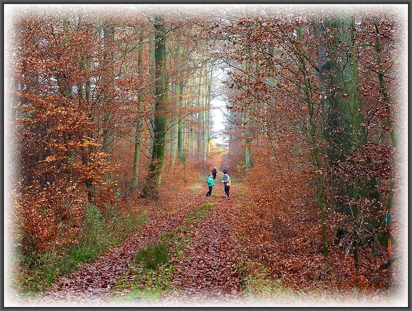 Romantische Herbststimmung im Forst Raben - Steinfeld.