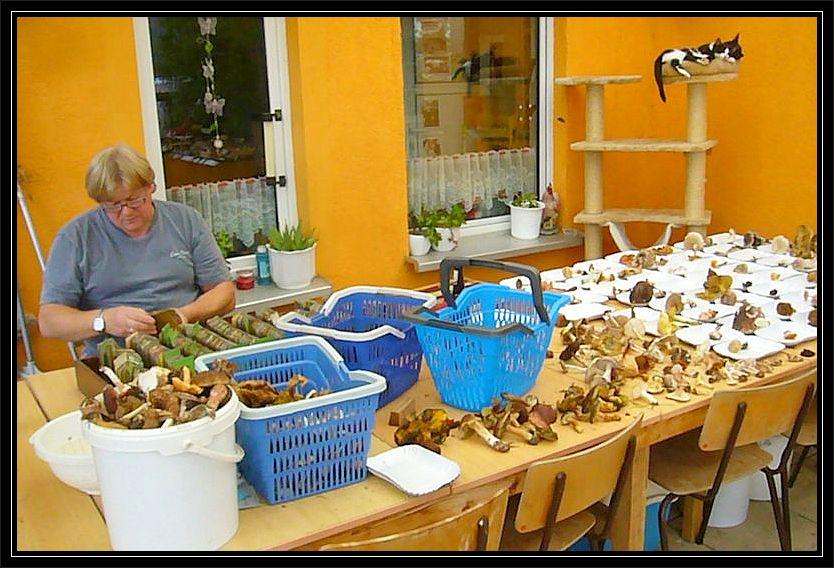 Unter der Regie von Pilz- und Vereinsfreund Egon aus Berlin enstand eine beeindruckende Frischpilzausstellung.