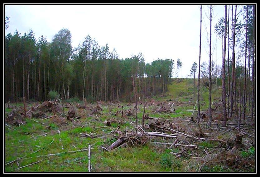 Hier zog während der Pfingstunwetter ein Tornado durch. Inzwischen hat die Forst die meisten Sturmschäden beseitigt.