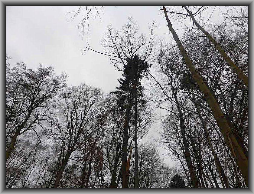 Aber vieleicht schaust du auch von oben durch die Bäume und nimmst Teil an unseren weiteren Pilzwanderungen?!