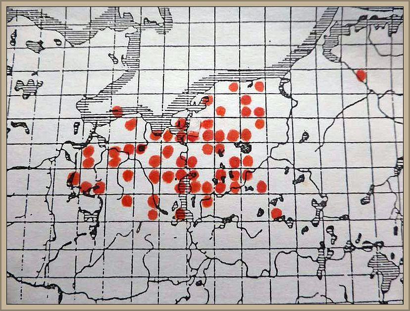 Armillaria mellea (Vahl.:Fr.) Kumm. s. str. - Honiggelber Hallimasch