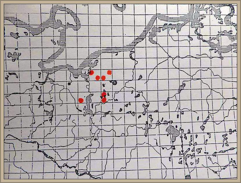 Boletus calopus Pers. - Schönfuß - Röhrling