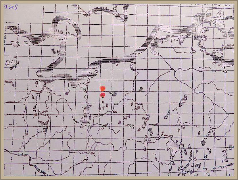 Boletus rythropus subsp. discolr (Quel.) Dermek, Kuthan et Sing. - Flockenstieliger Hexen - Röhrling, gelbe Form