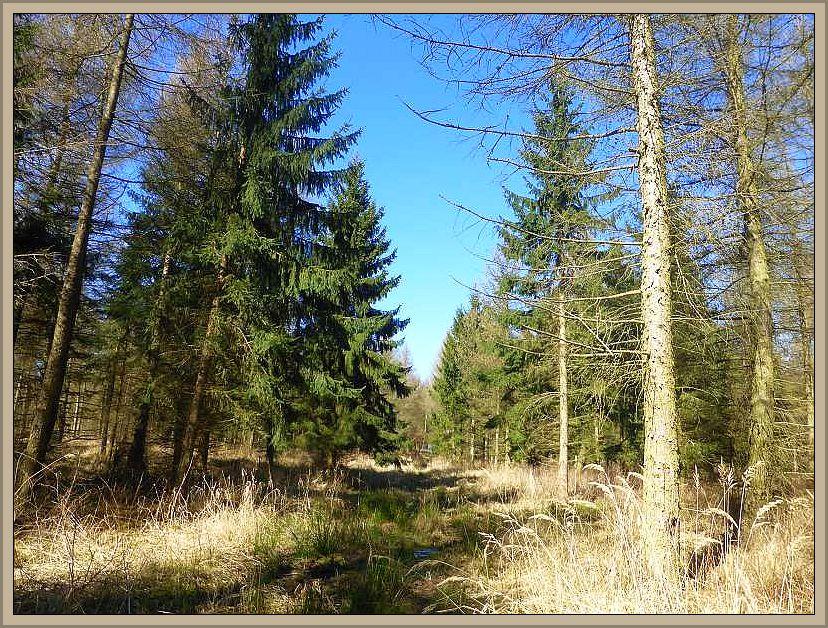Und weiter ging es bei herrlichstem Fühlingswetter durch diesen von Lärchen und Fichten dominierten Wald bei Alt Karin.