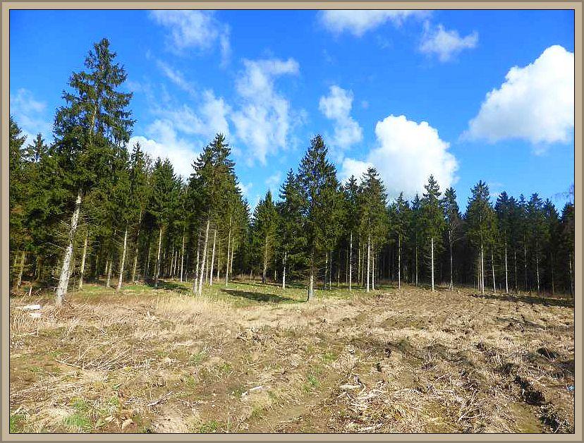 Wir danken dem Alt Kariner Wald für die reiche Ernte. Es war eine Wohltat, bei diesem schönen Wetter zum ersten mal in diesem Jahr zu einer Pilzwanderung unterwegs gewesen zu sein.