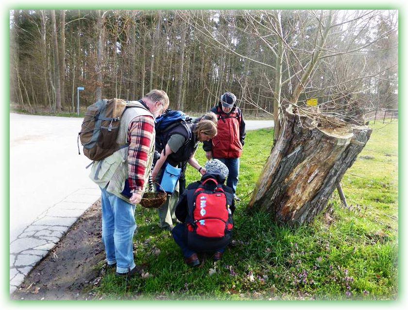 Gleich auf den ersten Schritten wurden wir fündig. Allerdings keine Pilze, sondern Kräuter weckten hier das Interesse der Naturfreunde.