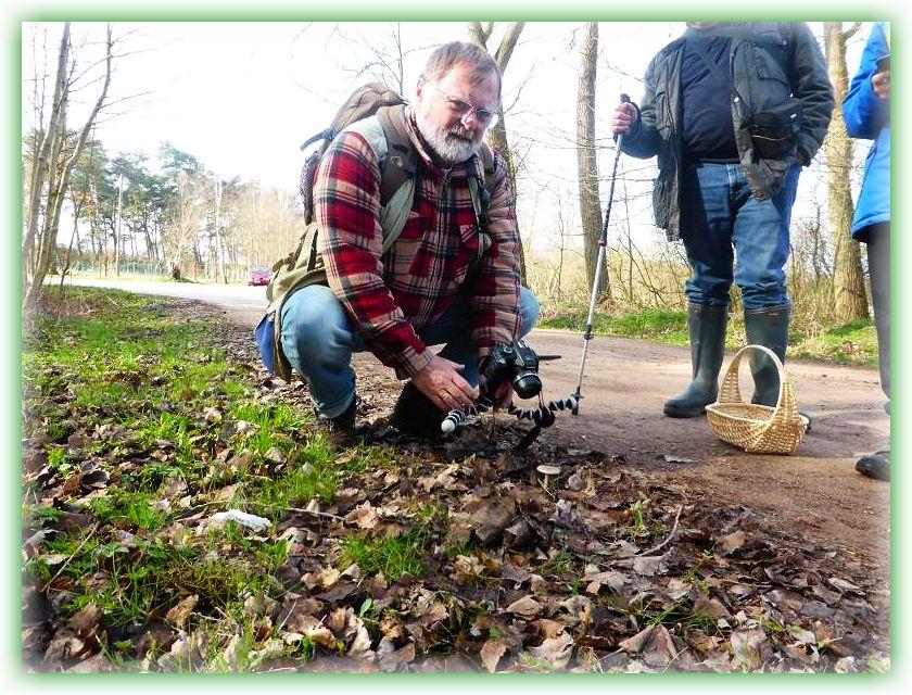 Nur wenig weiter gab es dann aber sogar richtige Pilze mit Hut und Stiel, dierekt und unübersehbar am Waldwegrand.