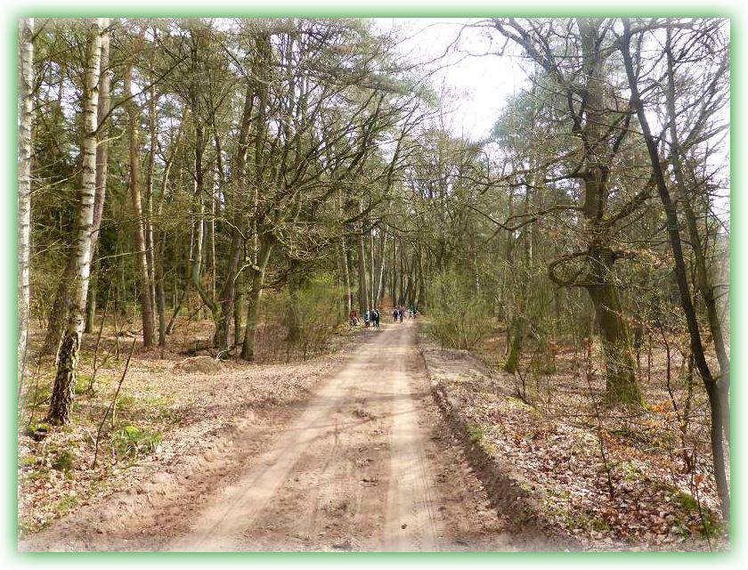 Weiter führte uns unser Weg durch den noch lichtdurchfluteten Frühlingswald.
