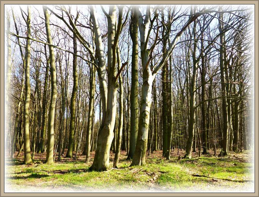 Ein schöner, solider und abwechslungsreicher Baumbestand mit Laub- und Nadelbäumen erwartete uns heute in dem kompakten, aber übersichtlichen Wald bei Alt Steinbeck.