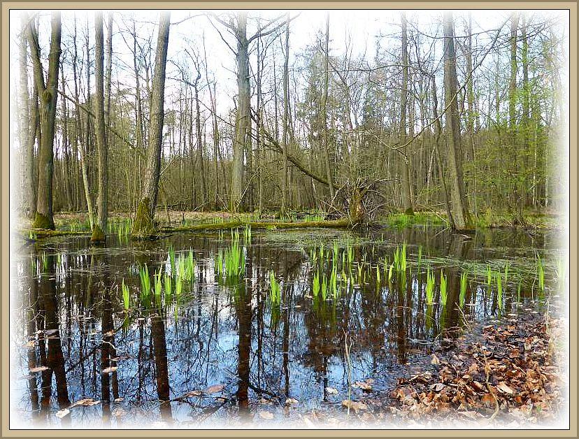 Immer wieder schöne Fotomotive in dieser erwachenden Frühlingslandschaft oder besser gesagt Wasserwelt.