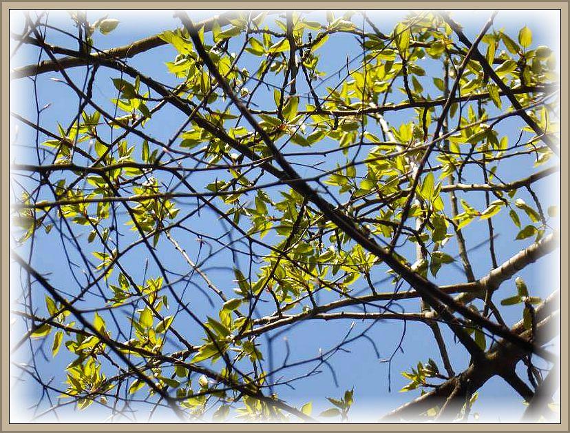 Birkenblätter sehen allerdings anders aus. Was mag dieses wohl für ein geheimnisvoller Laubbaum sein?