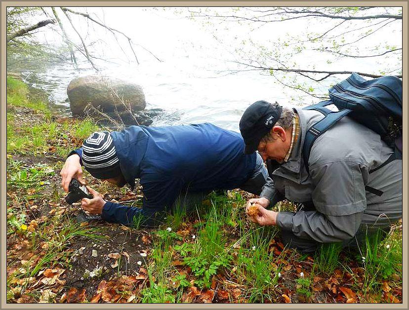 Aber dann standen sie vor uns, die ersten kleinen Speisemorcheln und es wurde fotografiert und geputzt.