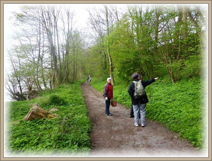 Zu entdecken gab es für den naturinteressierten Wanderer in der frisch erwachenden Natur vielerlei, dass mußten nicht nur Pilze sein.