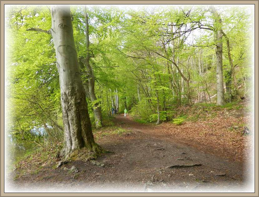 Allmählich schließt sich das Blätterdach in unseren Laubwäldern.