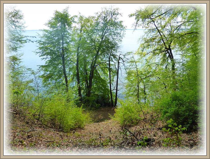 Die steilen Hangterrassen zum Schweriner See hin waren heute seit einigen Jahren mal wieder Ziel einer Frühlingswanderung des Steinpilz - Wismar.