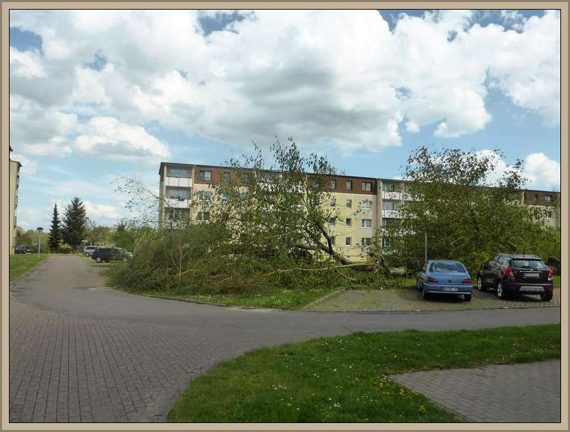 Umgestürtzte Bäume in diesem Plattenbaugebiet.