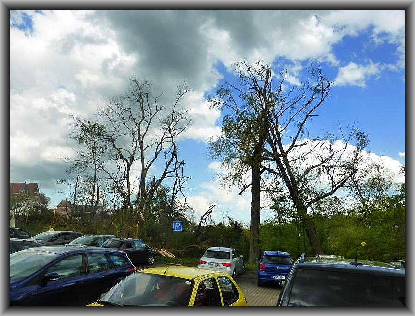 Bäume, die dem Sturm gerade noch stand gehalten haben stehen teils schief un d sind vollständig entlaubt.