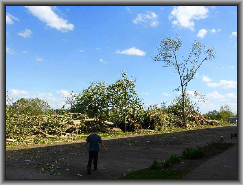 Nur ein Baum ist hier stehen geblieben. Jonas steht fassungslos vor diesem Schlachtfeld der Natur.
