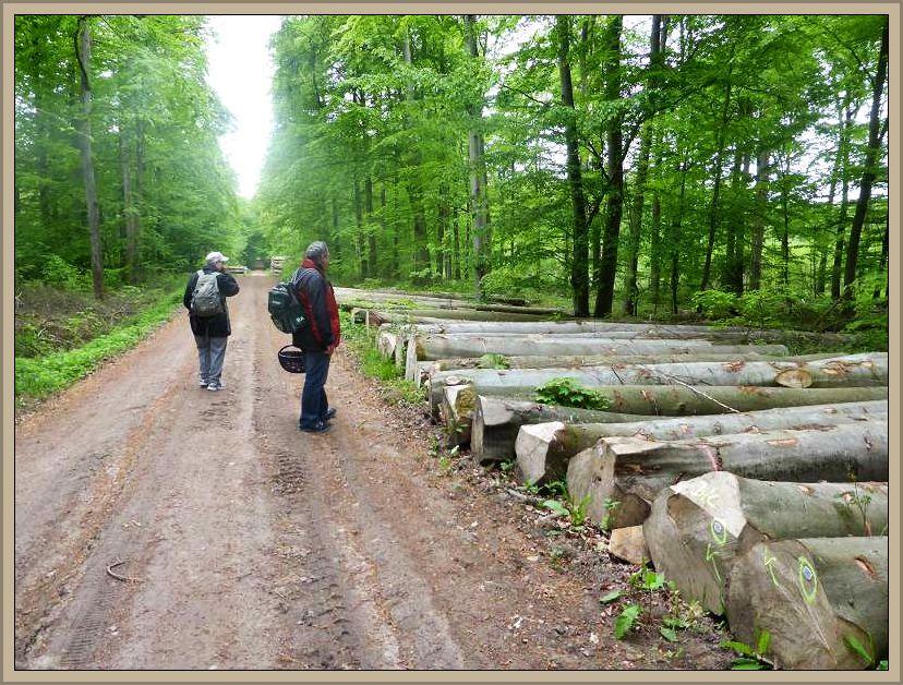Wie auch in fast allen Wäldern wird hier derzeit massiv Holz eingeschlagen.