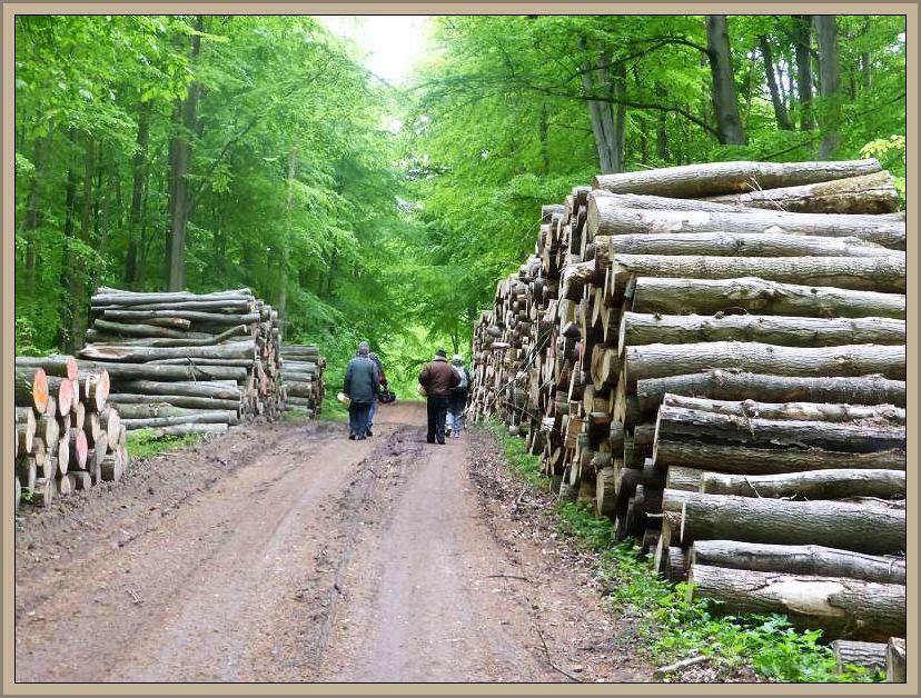 Weiter geht es durch die Wände eingeschlagenen Holzes.