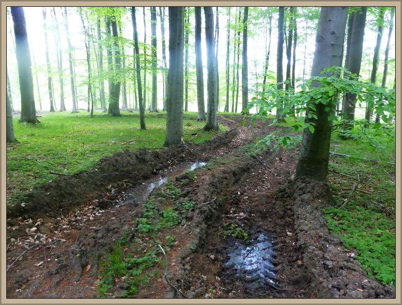 Tiefe furchen durch die schwere Erntetechnik der Forstwirtschaft.