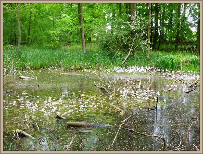 Dieses Gewässer b.z.w. die Uferzone hatte es ihnen angetan.